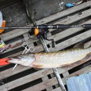 sedobnie_primanki_select_fishing_easy-shiner-shad_col-pike